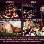 Are You a Free-Range Chicken?
